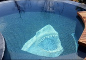 Shark Pool pic 3