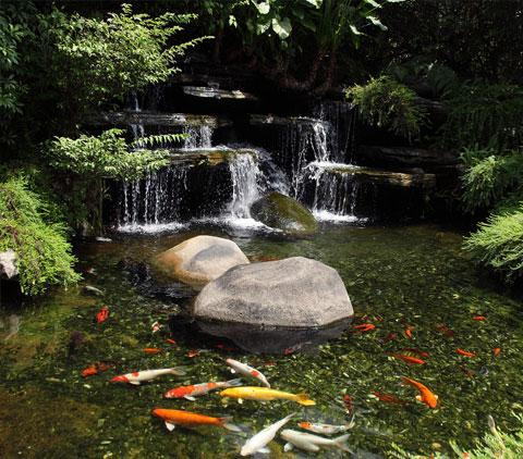Swimming pools find reputable pool builders in your area for Koi pond builders orange county
